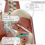 【3D人体模型アプリ】「ヒューマン・アナトミー・アトラス2021」が120円のセール 3Dモデルを360度グリグリ回せるぞ